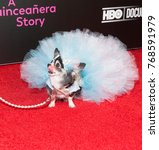 Small photo of New York, NY - December 4, 2017: Dog wears dress by Anthony Rubio on red carpet HBO screening and presentation of 15: A QUINCEANERA STORY at The Garage