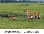 Small photo of Lioness guards zebra kill while her two cubs cavort, Masai Mara Game Reserve, Kenya