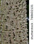 floss silk tree  or called ... | Shutterstock . vector #768602131