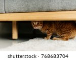 a cat hiding under a couch | Shutterstock . vector #768683704