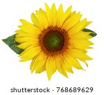 single beautiful sunflower with ... | Shutterstock . vector #768689629