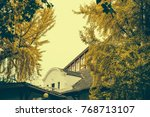 yellow color leaves for autumn... | Shutterstock . vector #768713107