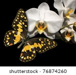White Orchid And Butterfly On ...