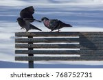 Two Doves On A Bench In The...
