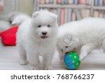 Stock photo puppies siberian dog 768766237
