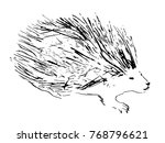 porcupine. hand drawn... | Shutterstock .eps vector #768796621