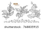 vector set of coffee tree... | Shutterstock .eps vector #768835915