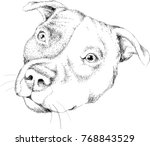 The Vector Logo Dog For T Shir...