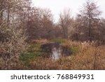 picturesque autumn in the... | Shutterstock . vector #768849931