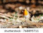 european robin  common.... | Shutterstock . vector #768895711