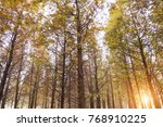 beautiful forest in china | Shutterstock . vector #768910225