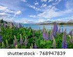 lupine flower at lake tekapo | Shutterstock . vector #768947839