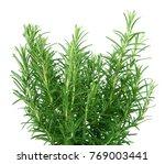 a fresh rosemary plant on white ... | Shutterstock . vector #769003441