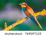 colored bird in the warm rays...   Shutterstock . vector #769097125
