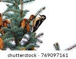 New Year\'s Plot Of Woodpecker...
