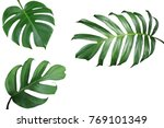 tropical leaves nature frame... | Shutterstock . vector #769101349