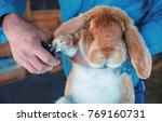 rabbit breeder trimming nails... | Shutterstock . vector #769160731