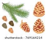 pine branch set. vector set of... | Shutterstock .eps vector #769164214