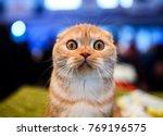 Stock photo cute shocked cat 769196575