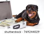 close up portrait of rottweiler ... | Shutterstock . vector #769244029