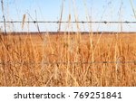 Closeup Of Dried Grasses And A...