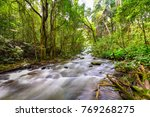 Cascade Falls Over Mossy Trunk...