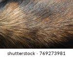 dog fur texture hair dog | Shutterstock . vector #769273981