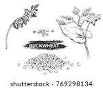 hand drawn illustration set of... | Shutterstock .eps vector #769298134