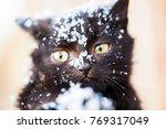 Stock photo kitten in the snow 769317049