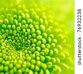 green flower | Shutterstock . vector #76932238