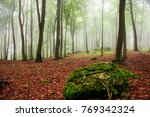 morning in the foggy forest | Shutterstock . vector #769342324
