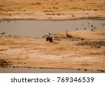 vultures in the savanna of in