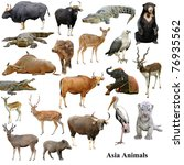 Asian Animals Collection Isolated White - Fine Art prints