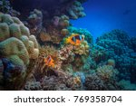 colorful underwater background... | Shutterstock . vector #769358704