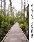 goose creek state park boardwalk | Shutterstock . vector #769362325