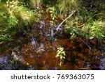 goose creek state park | Shutterstock . vector #769363075