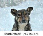 portrait of sad dog in winter ... | Shutterstock . vector #769453471