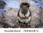 squirrel eating nut. funny... | Shutterstock . vector #769461871