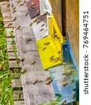 Small photo of entrance of a beehive with lots of bees in sunny ambiance