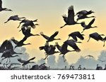 Stock photo birds in flight a silhouettes of cranes in flight flock of cranes flies at sunrise foggy morning 769473811