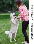 Stock photo photo of girl holding dog by front paws on green lawn 769516411