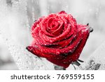 close up of beautiful red rose... | Shutterstock . vector #769559155