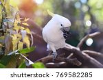 beautiful white cockatoo ...   Shutterstock . vector #769582285