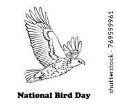 Hand Drawn Sketch Of Eagle....