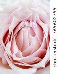 Stock photo pink roses petals close up 769602799