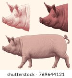 pig. design set. hand drawn... | Shutterstock .eps vector #769644121
