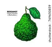 bergamot vector drawing.... | Shutterstock .eps vector #769650859