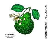 bergamot vector drawing.... | Shutterstock .eps vector #769651021