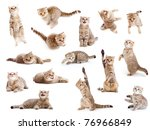 Stock photo striped british cat and kitten isolated set 76966849