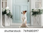dog on the porch. little jack... | Shutterstock . vector #769680397